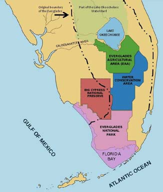 panther habitat map with The Everglades on Czarna Pantera Mity I Fakty in addition  besides Facts About Snow Leopards furthermore Black Panther Uncategorized Presentation ZIxJfKU8a0 together with Endangered Animals Panther.